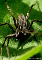 spiders_7