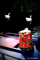 swans_28