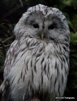 Various Owls.